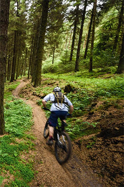 Cycle Routes -Dalby Forest Trail